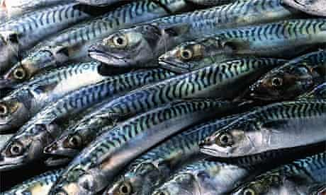 Fish: Mackerel