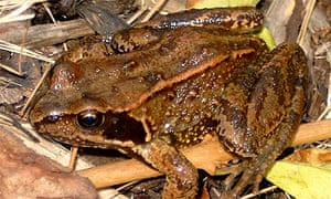 How to make your garden frog-friendly | Environment | The Guardian