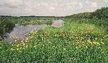 Shapwick heath Avalon lakes