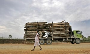 Logs being taken to a pulp and paper factory in Riau province, Sumatra