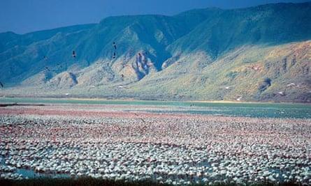 Thousands of lesser flamingos on Lake Bogoria in the Rift Valley, Kenya