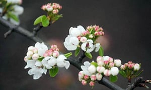 Blossom in Richmond park