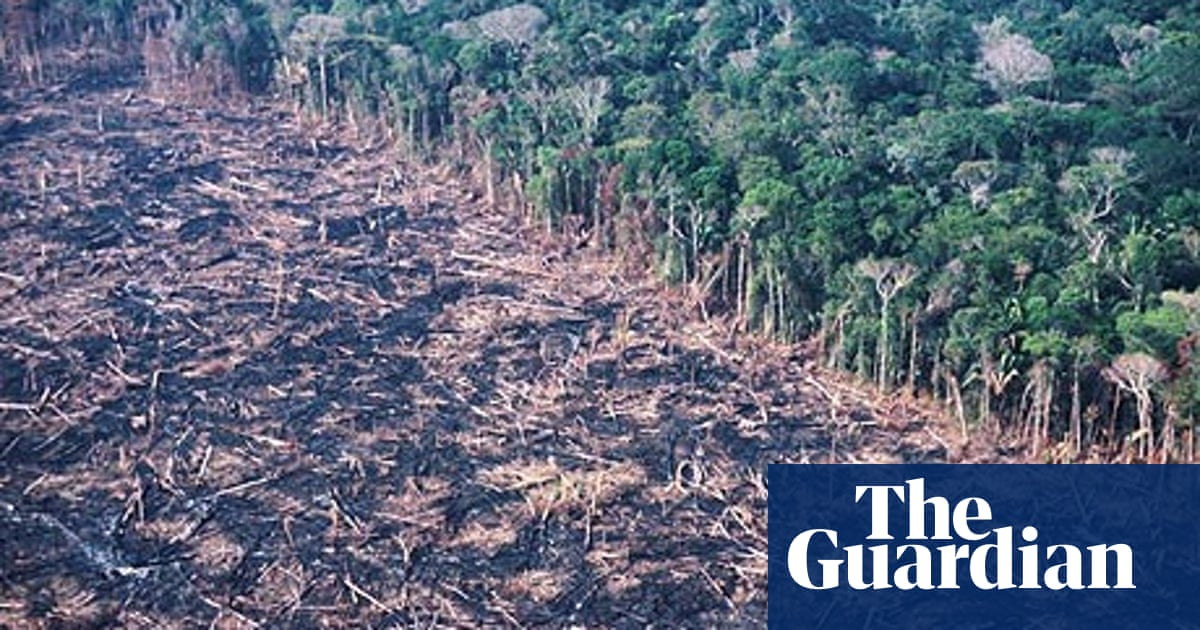 How do trees and forests relate to climate change? | Environment