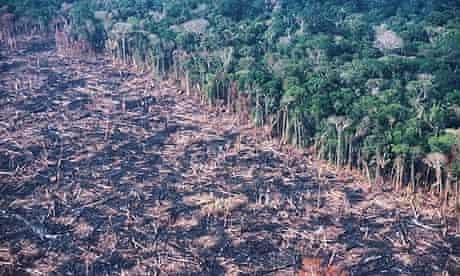 Amazon rainforests of Brazil