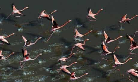 Flamingos at Everglades national park