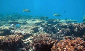 Plight of the coral reefs