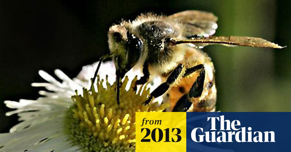 Traffic fumes make honeybees unable to recognise flower