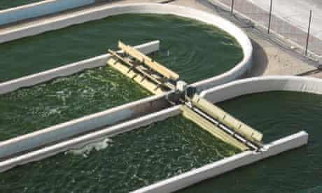 Algal fuel growing in open ponds in Israel