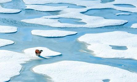 ADDI Concepts' life-vest design for displaced polar bears struggling to stay afloat