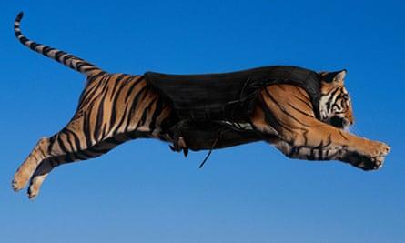 ADDI Concepts' bulletproof vest for Bengal tigers