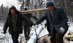 Loggers at work in the Yinchun forest, China