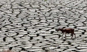 A goat walks along the sun-baked bed of Cyprus's largest reservoir at Kouris
