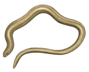Other wildlife gallery: Slow worm illustration