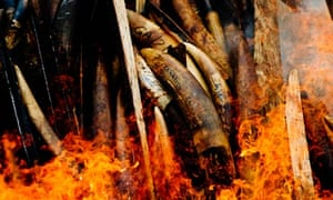 Seized ivory goes up in smoke in Gabon