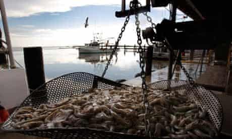 Fresh shrimp in Louisiana