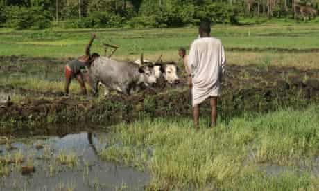 MDG Guinea-Bissau