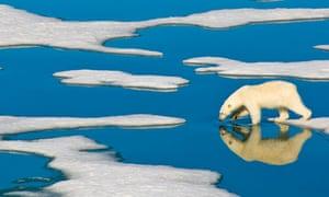 A lone polar bear walks on Arctic pack ice