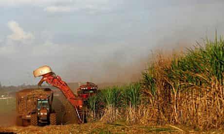 Sugar cane being cut in Brazil
