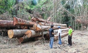 Illegally felled timber in the Amazon rainforest.