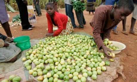 Zimbabwean children sort fruit