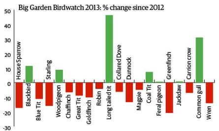 Big Garden Birdwatch 2013