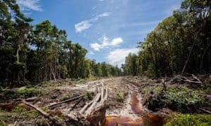 palm oil sumatra indonesia