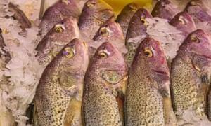 Fresh Whole salmon Fish