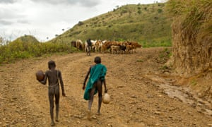 MDG: Suri herders with cattle, Ethiopia, Omo Region, Tulgit