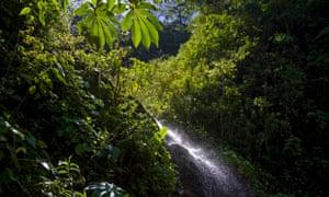 Peru southern Amazon region of Madre de Dios