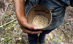 MDG : Food security and malnutrition : farmer holds up dried corn kernels, donated by WFP
