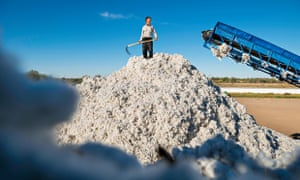 A worker in Uzbekistan's cotton industry, where a ban on child labour has led to more coercion of adult workers during the harvest.