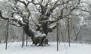 Major oak in Sherwood Forest National Nature Reserve, Edwinstowe, Nottinghamshire