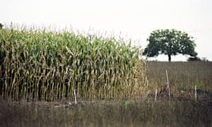 speech on genetically modified crops