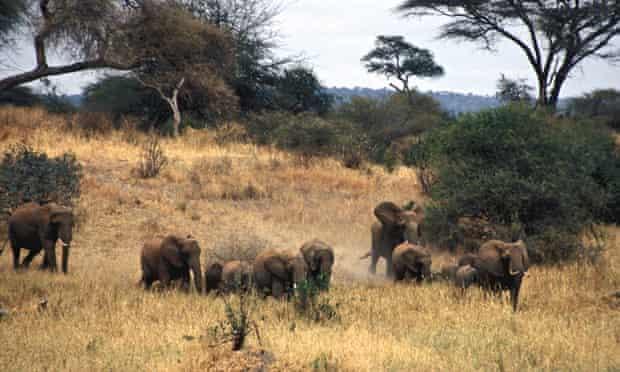 Herd of elephants in Tarangire National Park, Tanzania.