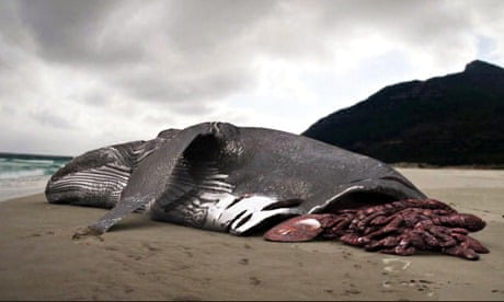 Did Discovery Channel fake the image in its giant shark