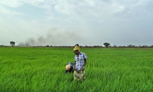 MDG : Agriculture in Africa : Employees of Saudi Star rice farm work in a paddy in Gambella Ethiopia