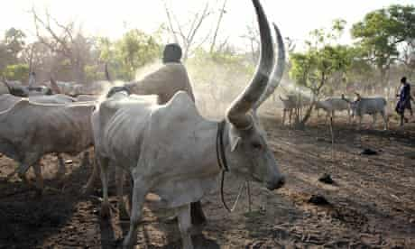 MDG : South Sudan : MDG : South Sudan : A cattle camp in Cueibet, Lakes State