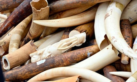 Elephant ivory destruction by French customs in Paris