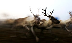 Finland - Sami Reindeer Herders - an Arctic tradition imperilled