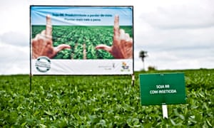 Genetically modified GM crop : Monsanto Presents Genetically Modified Soybean Variety