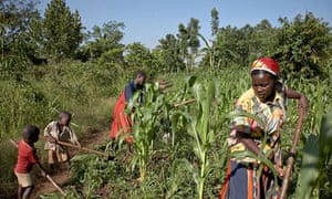 MDG : Parity men and women farming in Uganda, Women in africa
