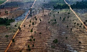 App deforestation in Indonesia : Forest clearing in the Kerumutan area in Riau, Sumatra, Indonesia