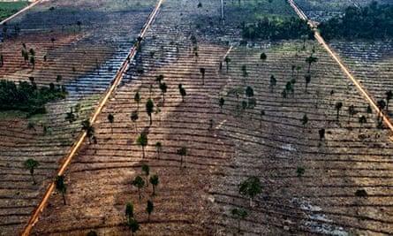 App deforestation in Indonesia : Forest clearing in the Kerumutan area in Riau, Sumatra, Indonesia