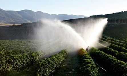 Climate change and coffee farming :  coffee trees are irrigated in a farm in Brazil