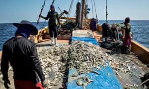 MDG : Human rights abuses in Thai fisheries, Thailand