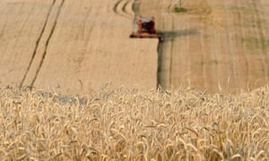 MDG : Agriculture and business : A combine harvester at work in a wheat field