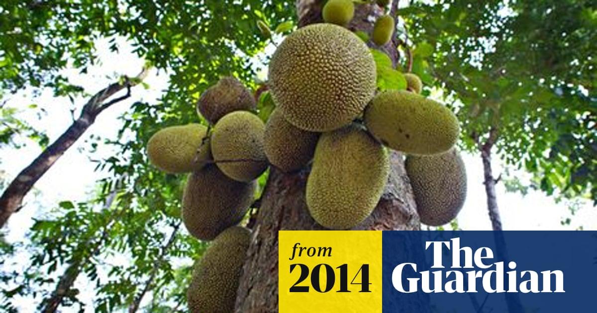 Jackfruit heralded as 'miracle' food crop | Environment | The Guardian