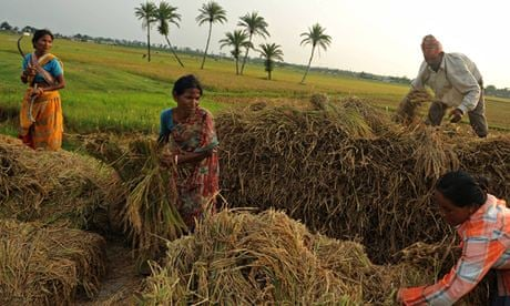 Image result for Images for farners of Tamilnadu engaged in harvesting the crops.
