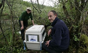 Beavers released into the wild in Scotland, Simon Jones from the Scottish Beaver Trial