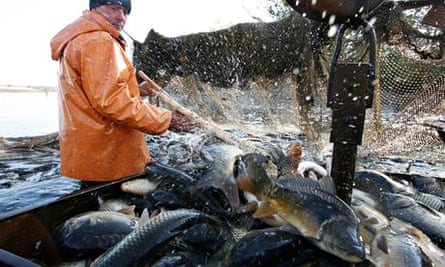 An employee works at Volma fish farm near the village of Azyorny